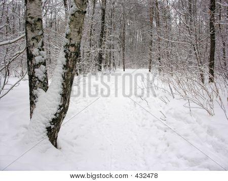 Winter Trope