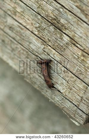 Old weather beaten wooden plank with rusty nail