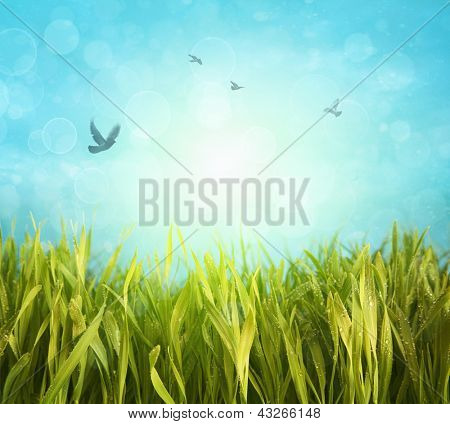 Fresh spring grass with bright blue sky
