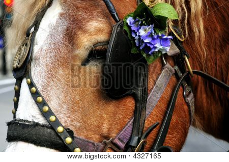 Horse With Flower