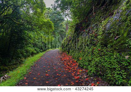 Flower-strewn Path Through Lush Forest
