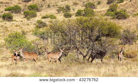 Kudu Group
