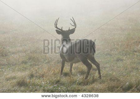 Buck On Alert.