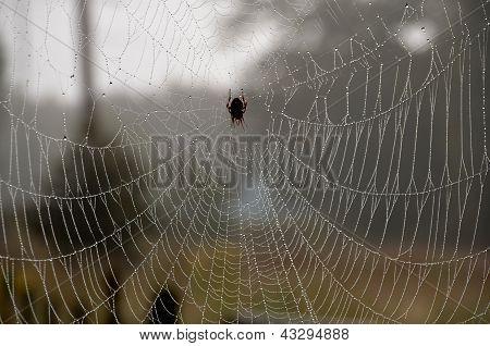 Teia de aranha