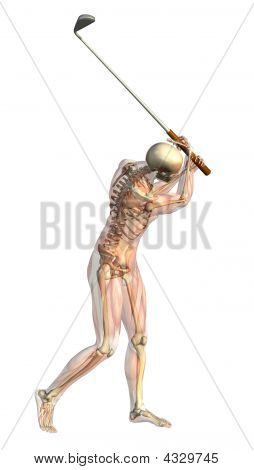 Skeleton With Semi-transparent Muscles - Golf Swing