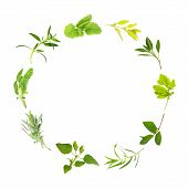 stock photo of hyssop  - Herb Leaf circle of lemon balm golden marjoram sage feverfew mint tarragon bergamot lavender variegated sage hyssop over white background - JPG