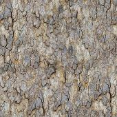 Maple Bark. Seamless Texture.