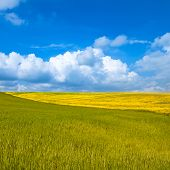 Rural Landscape. Yellow And Green Field With Cloudy Blue Sky