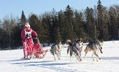foto of sled-dog  - this woman was a breast cancer survivor so she dressed in pink for the event - JPG