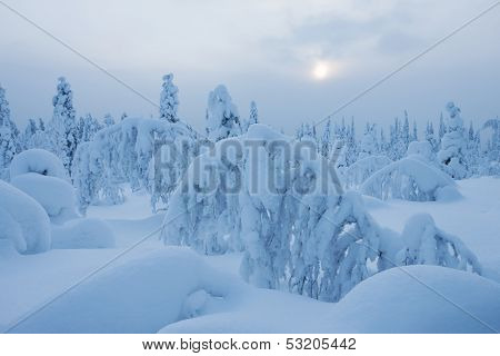 Nordic Winter Forest With Lots Of Snow On Trees