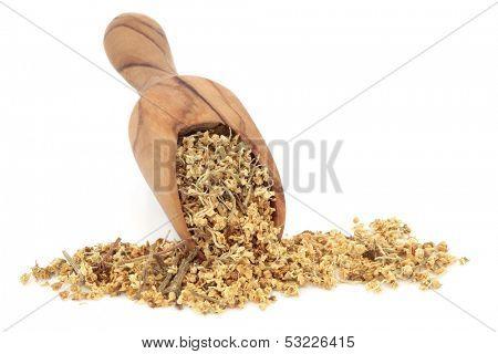 Elderflower herb tea leaves in an olive wood scoop over white background. Used in alternative medicine.