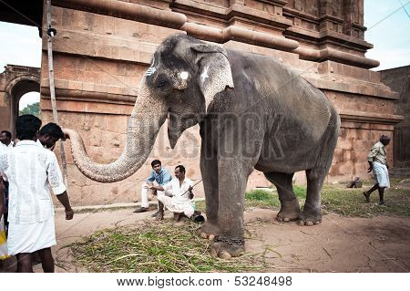 Thanjavur, India - February 13: Elephant With Painted Religious Symbols Blessings Pilgrims At Hindu