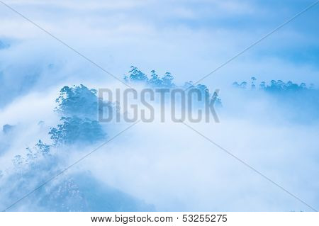 Morning mist at mountains and trees