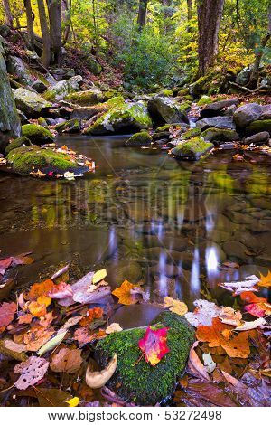 Leaf-strewn Stream In The Smokies