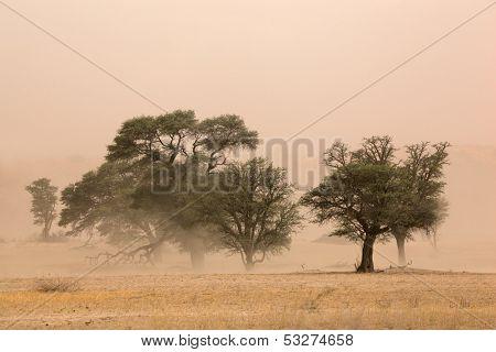 Severe sand storm in the Kalahari desert, South Africa