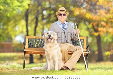 Senior blind gentleman sitting on a wooden bench with his labrador retriever dog, in a park