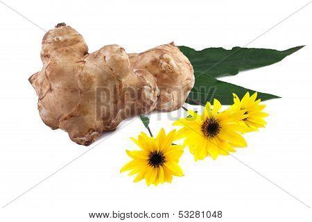 tubers and flowers of jerusalem artichoke