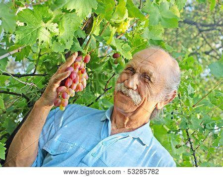 Elderly Happy Man Holds A Ripe Grape.