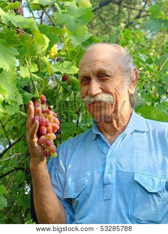 Happy Elderly Man Holds A Ripe Grape.