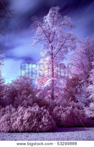 Stunning False Color Infrared Forest Landscape Image