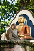Monkey sitting near Buddha statue. Nepal