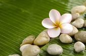 Pile of stones with frangipani on banana leaf