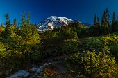 Beautiful Early Morning Sun on the Lush Hillside of Mount Rainier