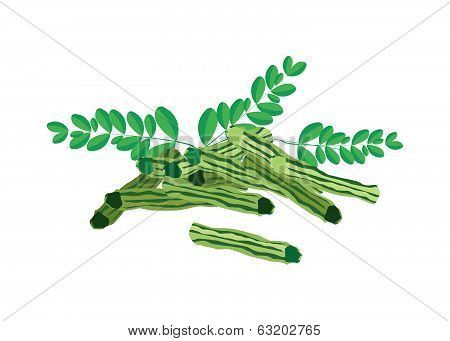 Fresh Moringa Fruit And Leaves On White Background