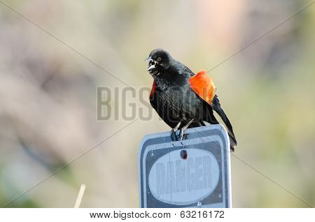 Blackbird On Sign