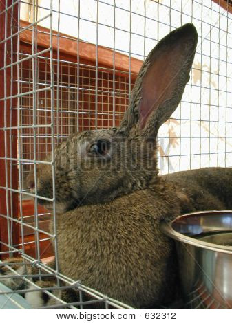 Shelter Rabbit