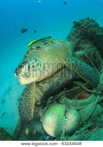 Environmental pollution issue: Turtle lies on old tyres and other underwater rubbish
