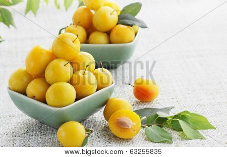 yellow cherry-plum