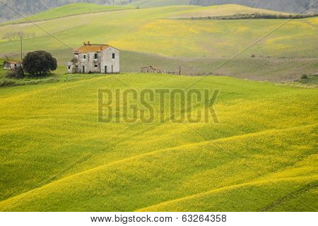 Yellow Field And Old Casale