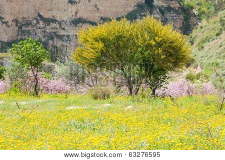 Spring In Mountain Area