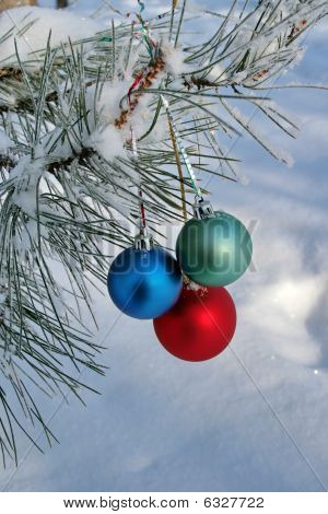 Three Colour Balls On A Pine