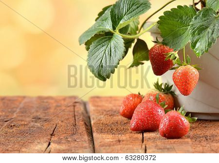 Strawberry plants growing in a pot.