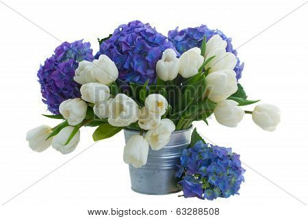 posy  of white tulips and blue hortensia flowers