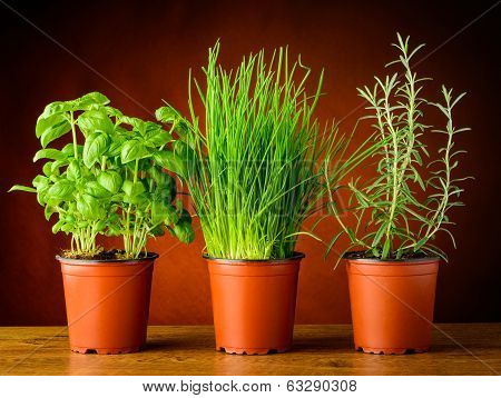 Pots With Fresh Herbs