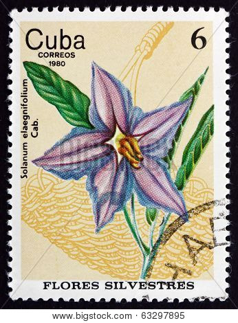 Postage Stamp Cuba 1980 Silverleaf Nightshade, Wildflower