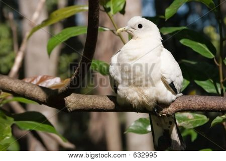 White Bird Sunning