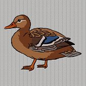 pic of crested duck  - Realistic brown duck on a gray background - JPG