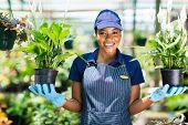 picture of greenhouse  - happy african florist holding two potted flowers in greenhouse - JPG
