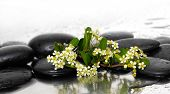 Spa still life with branch white spring flowers