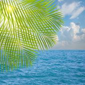seascape in sunny day with palm tree