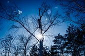 image of siluet  - Siluet tree against the sun with a blue sky - JPG
