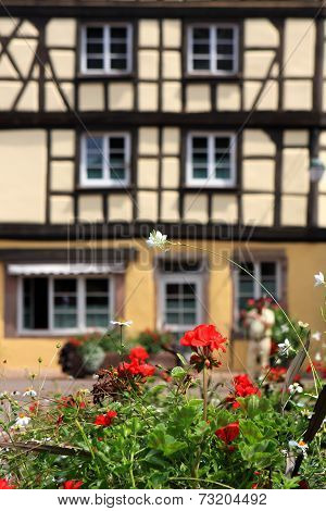 Colmar flowers