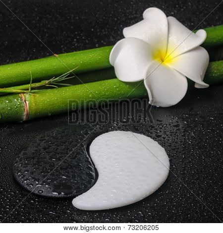 Spa Concept Of Tropical Frangipani Flower, Symbol Yin Yang And Natural Bamboo On Zen Basalt Stones W
