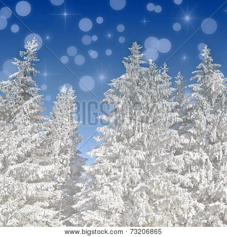 Christmas Background With Snow Covered Fir Tress