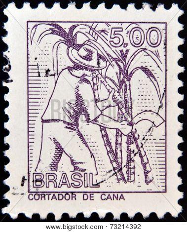 BRAZIL - CIRCA 1950: A stamp printed in Brazil shows cut cane circa 1950