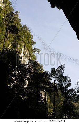 Bat Swarm, Borneo